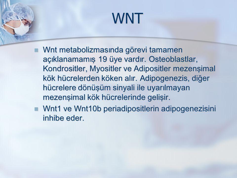 WNT Wnt metabolizmasında görevi tamamen açıklanamamış 19 üye vardır. Osteoblastlar, Kondrositler, Myositler ve Adipositler mezenşimal kök hücrelerden