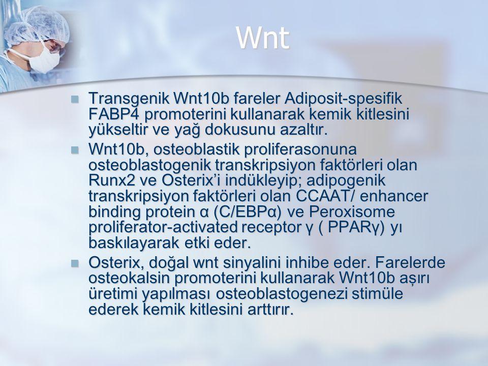 Wnt Transgenik Wnt10b fareler Adiposit-spesifik FABP4 promoterini kullanarak kemik kitlesini yükseltir ve yağ dokusunu azaltır. Transgenik Wnt10b fare