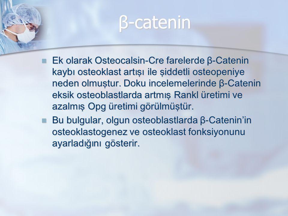 β-catenin Ek olarak Osteocalsin-Cre farelerde β-Catenin kaybı osteoklast artışı ile şiddetli osteopeniye neden olmuştur. Doku incelemelerinde β-Cateni