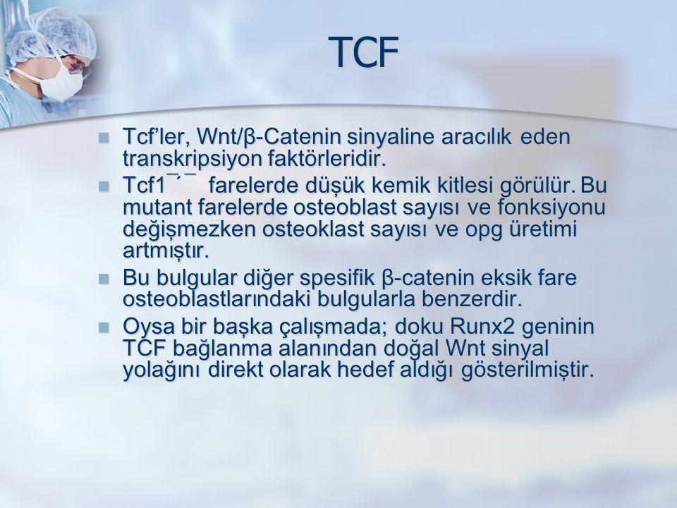 TCF Tcf'ler, Wnt/β-Catenin sinyaline aracılık eden transkripsiyon faktörleridir. Tcf'ler, Wnt/β-Catenin sinyaline aracılık eden transkripsiyon faktörl