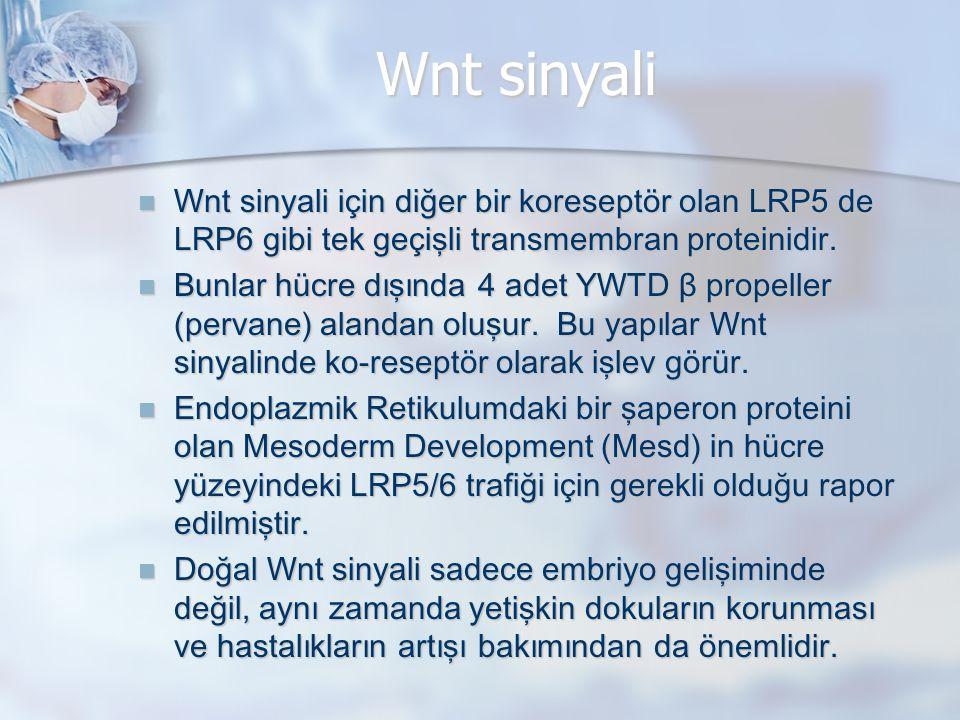 Wnt sinyali Wnt sinyali için diğer bir koreseptör olan LRP5 de LRP6 gibi tek geçişli transmembran proteinidir. Wnt sinyali için diğer bir koreseptör o