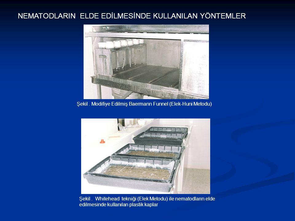 NEMATODLARIN ELDE EDİLMESİNDE KULLANILAN YÖNTEMLER Şekil. Modifiye Edilmiş Baermann Funnel (Elek-Huni Metodu) Şekil. Whitehead tekniği (Elek Metodu) i