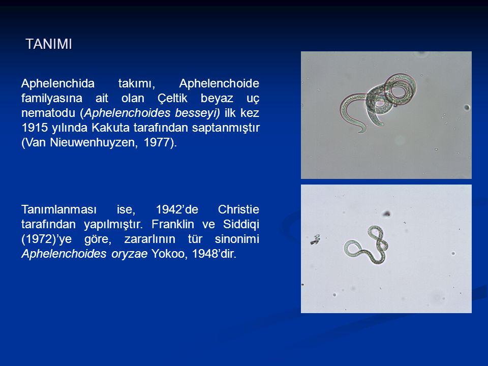 Aphelenchida takımı, Aphelenchoide familyasına ait olan Çeltik beyaz uç nematodu (Aphelenchoides besseyi) ilk kez 1915 yılında Kakuta tarafından sapta