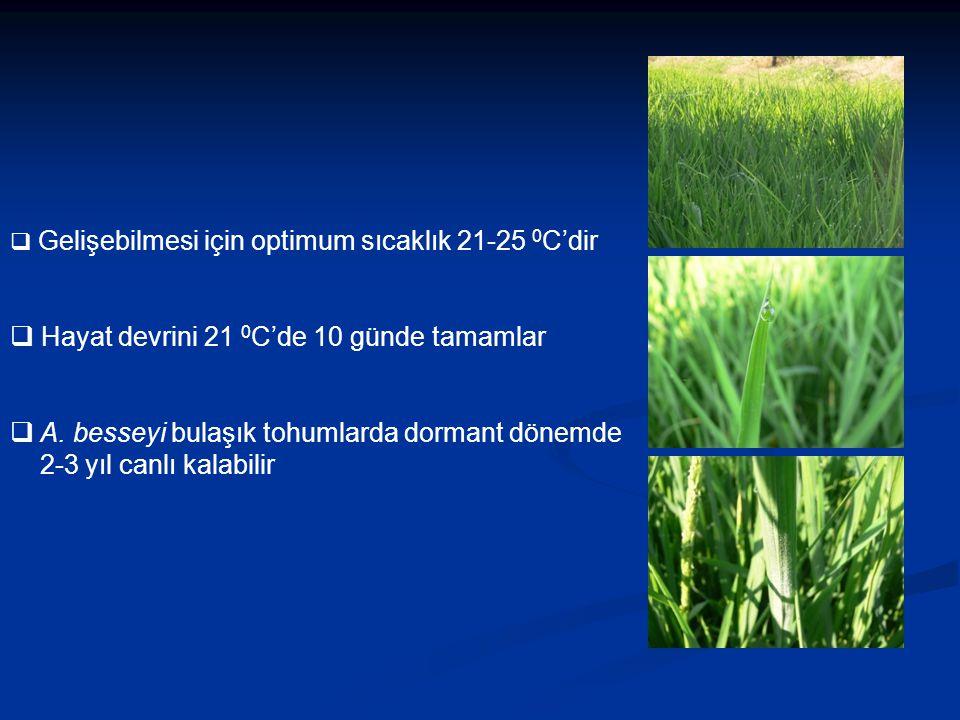  Gelişebilmesi için optimum sıcaklık 21-25 0 C'dir  Hayat devrini 21 0 C'de 10 günde tamamlar  A. besseyi bulaşık tohumlarda dormant dönemde 2-3 yı
