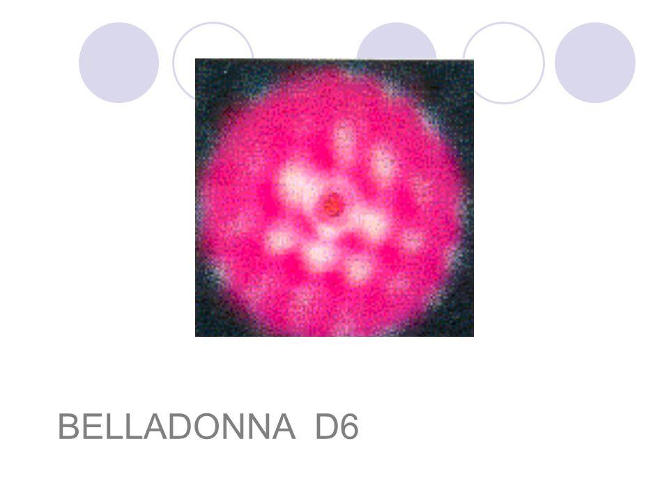 BELLADONNA D6