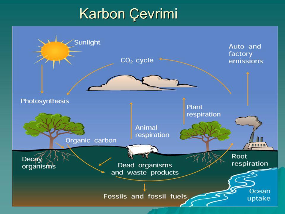 Karbon Çevrimi