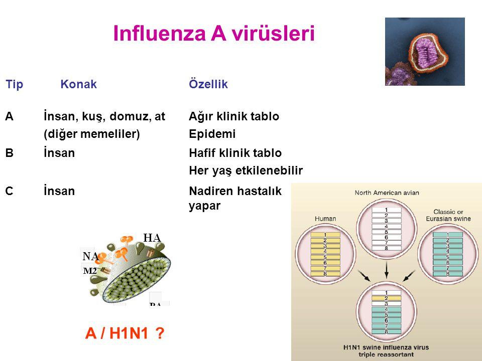 Influenza A virüsleri A / H1N1 ? Tip KonakÖzellik Aİnsan, kuş, domuz, at (diğer memeliler) Ağır klinik tablo Epidemi BİnsanHafif klinik tablo Her yaş