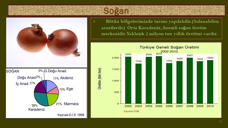  Bütün bölgelerimizde tarımı yapılabilir.(Sulanabilen arazilerde) Orta Karadeniz, önemli so ğ an üretim merkezidir.