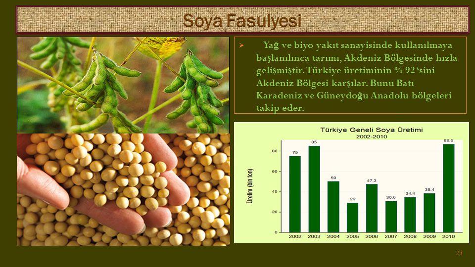  Ya ğ ve biyo yakıt sanayisinde kullanılmaya ba ş lanılınca tarımı, Akdeniz Bölgesinde hızla geli ş mi ş tir.