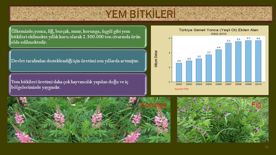 Ülkemizde;yonca, fi ğ, burçak, mısır, korunga, üçgül gibi yem bitkileri ekilmekte yıllık kuru olarak 2.500.000 ton civarında ürün elde edilmektedir.