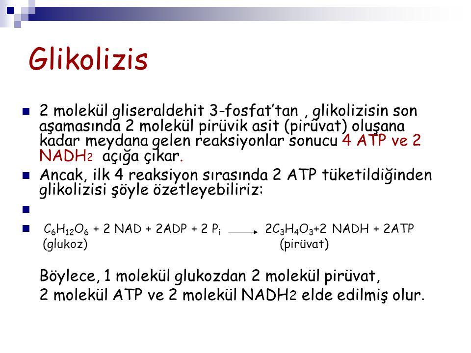 Glikolizis 2 molekül gliseraldehit 3-fosfat'tan, glikolizisin son aşamasında 2 molekül pirüvik asit (pirüvat) oluşana kadar meydana gelen reaksiyonlar