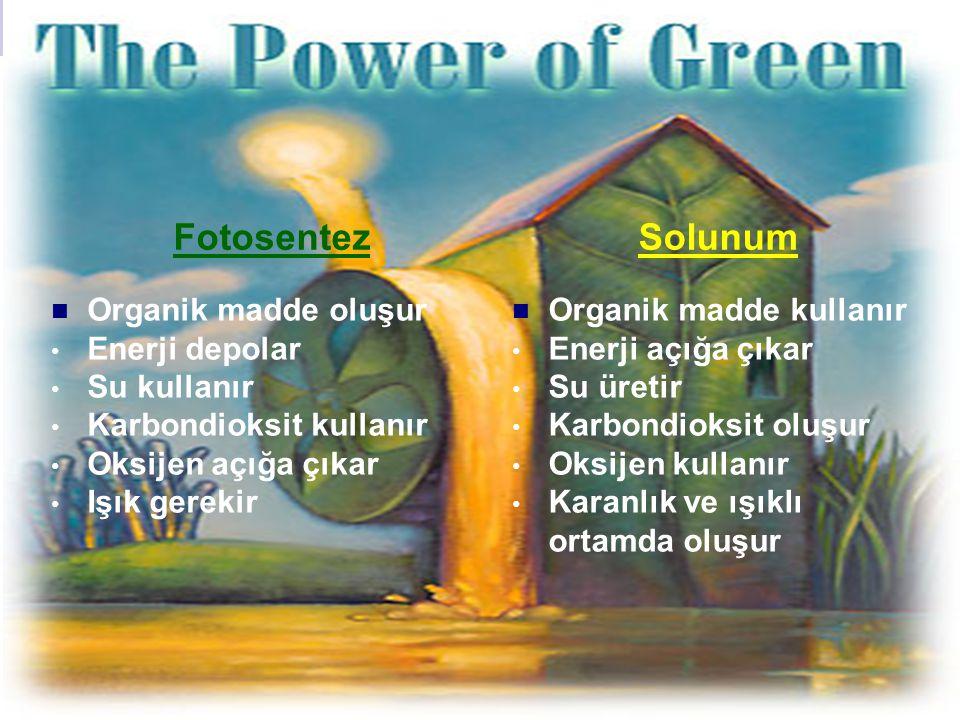 FotosentezSolunum Organik madde oluşur Enerji depolar Su kullanır Karbondioksit kullanır Oksijen açığa çıkar Işık gerekir Organik madde kullanır Enerj