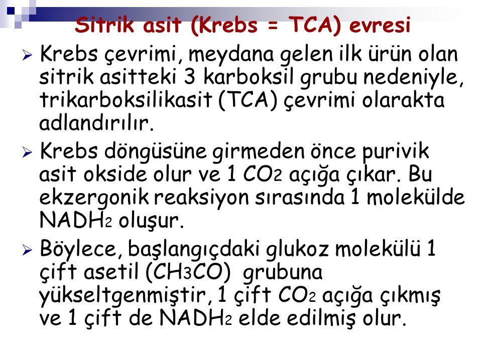 Sitrik asit (Krebs = TCA) evresi  Krebs çevrimi, meydana gelen ilk ürün olan sitrik asitteki 3 karboksil grubu nedeniyle, trikarboksilikasit (TCA) çe