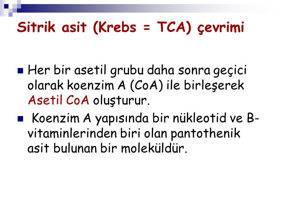 Sitrik asit (Krebs = TCA) çevrimi Her bir asetil grubu daha sonra geçici olarak koenzim A (CoA) ile birleşerek Asetil CoA oluşturur. Koenzim A yapısın