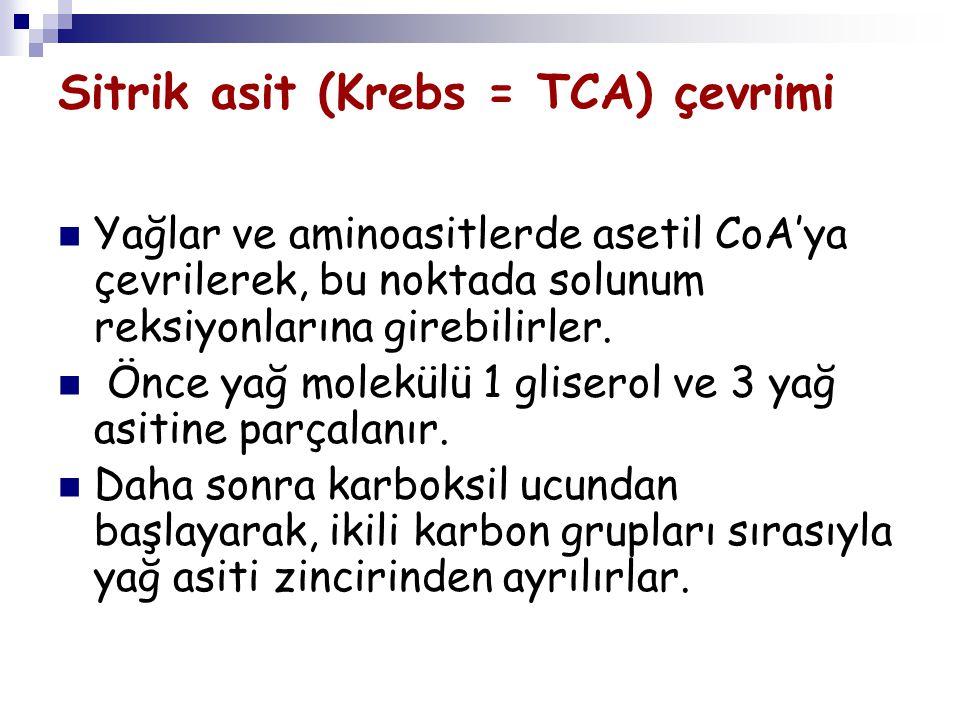Sitrik asit (Krebs = TCA) çevrimi Yağlar ve aminoasitlerde asetil CoA'ya çevrilerek, bu noktada solunum reksiyonlarına girebilirler. Önce yağ molekülü