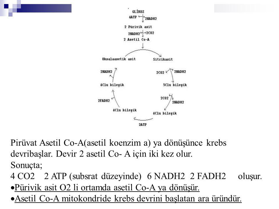Pirüvat Asetil Co-A(asetil koenzim a) ya dönüşünce krebs devribaşlar. Devir 2 asetil Co- A için iki kez olur. Sonuçta; 4 CO2 2 ATP (subsrat düzeyinde)