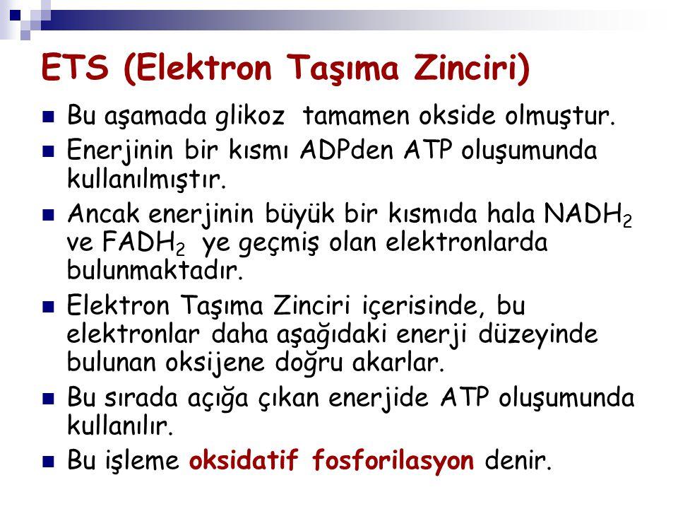 ETS (Elektron Taşıma Zinciri) Bu aşamada glikoz tamamen okside olmuştur. Enerjinin bir kısmı ADPden ATP oluşumunda kullanılmıştır. Ancak enerjinin büy