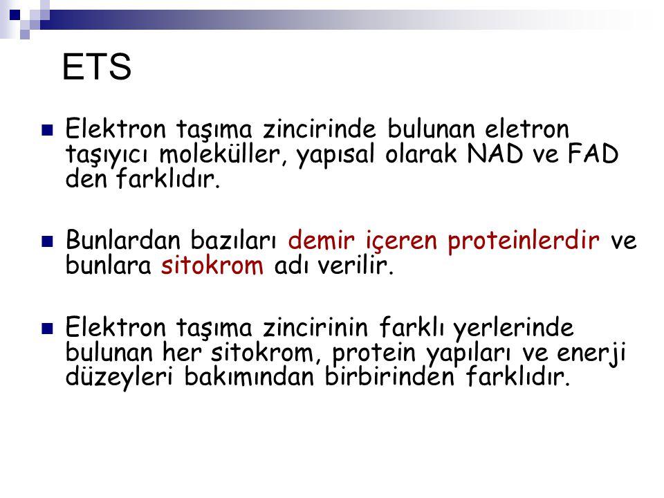 ETS Elektron taşıma zincirinde bulunan eletron taşıyıcı moleküller, yapısal olarak NAD ve FAD den farklıdır. Bunlardan bazıları demir içeren proteinle