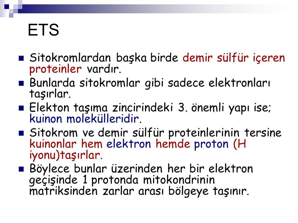 ETS Sitokromlardan başka birde demir sülfür içeren proteinler vardır. Bunlarda sitokromlar gibi sadece elektronları taşırlar. Elekton taşıma zincirind