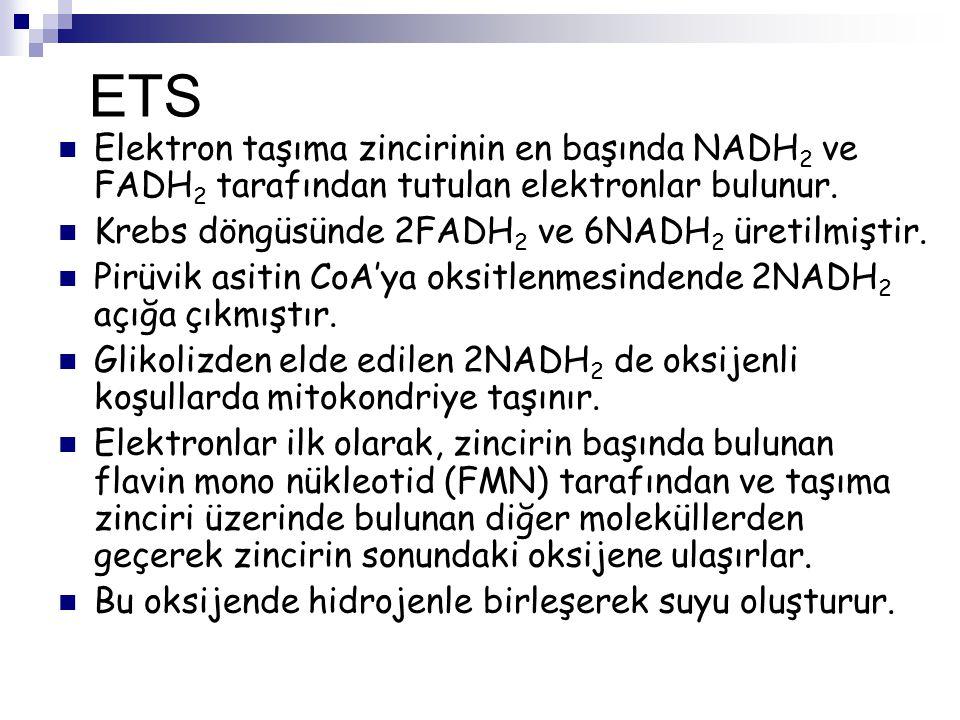 ETS Elektron taşıma zincirinin en başında NADH 2 ve FADH 2 tarafından tutulan elektronlar bulunur. Krebs döngüsünde 2FADH 2 ve 6NADH 2 üretilmiştir. P
