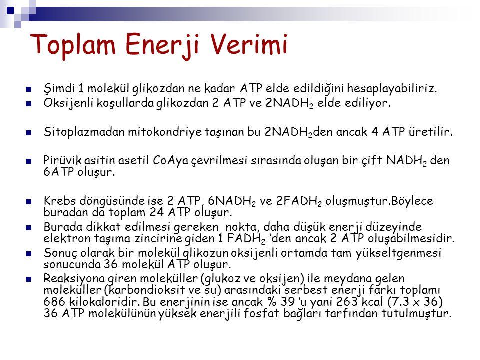 Toplam Enerji Verimi Şimdi 1 molekül glikozdan ne kadar ATP elde edildiğini hesaplayabiliriz. Oksijenli koşullarda glikozdan 2 ATP ve 2NADH 2 elde edi