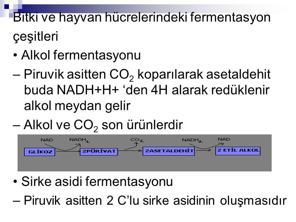 Bitki ve hayvan hücrelerindeki fermentasyon çeşitleri Alkol fermentasyonu – Piruvik asitten CO 2 koparılarak asetaldehit buda NADH+H+ 'den 4H alarak r