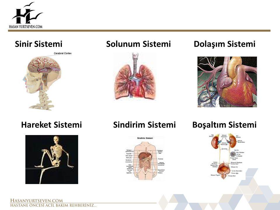 Sinir Sistemi Solunum Sistemi Dolaşım Sistemi Hareket Sistemi Sindirim Sistemi Boşaltım Sistemi
