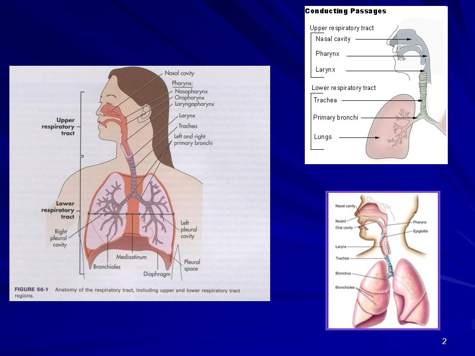 3 Alt Solunum Yolu İnfeksiyonları Trakeit, trakeobronşit Bronşit Bronşiolit Bronkopnömoni Pnömoni