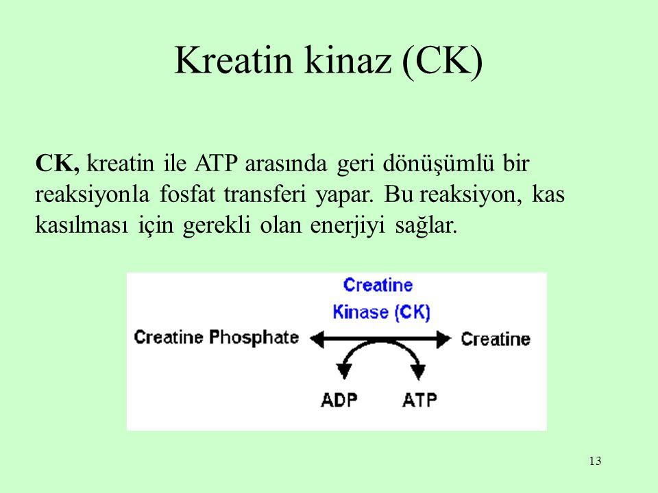 13 Kreatin kinaz (CK) CK, kreatin ile ATP arasında geri dönüşümlü bir reaksiyonla fosfat transferi yapar. Bu reaksiyon, kas kasılması için gerekli ola