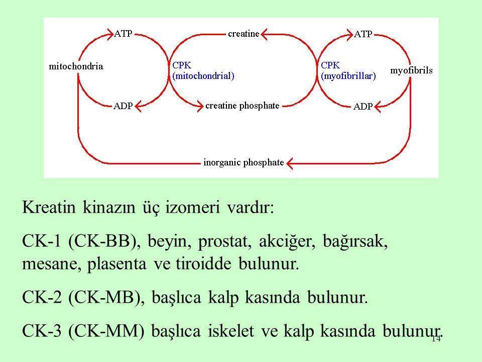 14 Kreatin kinazın üç izomeri vardır: CK-1 (CK-BB), beyin, prostat, akciğer, bağırsak, mesane, plasenta ve tiroidde bulunur. CK-2 (CK-MB), başlıca kal