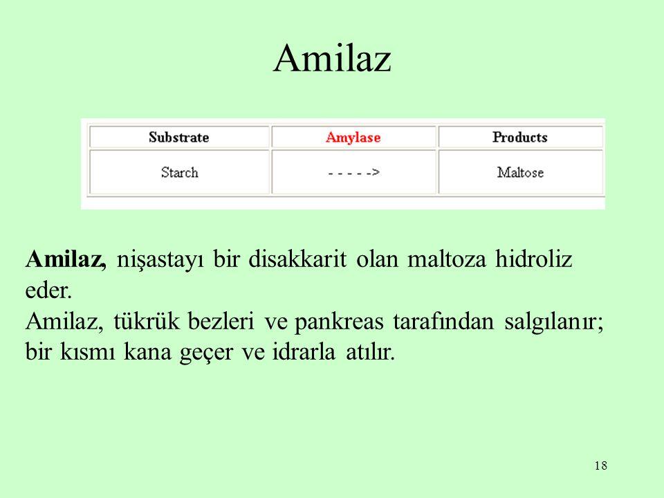 18 Amilaz Amilaz, nişastayı bir disakkarit olan maltoza hidroliz eder. Amilaz, tükrük bezleri ve pankreas tarafından salgılanır; bir kısmı kana geçer