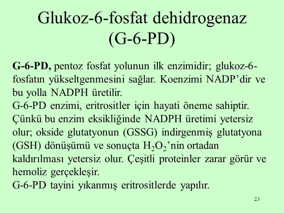 23 Glukoz-6-fosfat dehidrogenaz (G-6-PD) G-6-PD, pentoz fosfat yolunun ilk enzimidir; glukoz-6- fosfatın yükseltgenmesini sağlar.