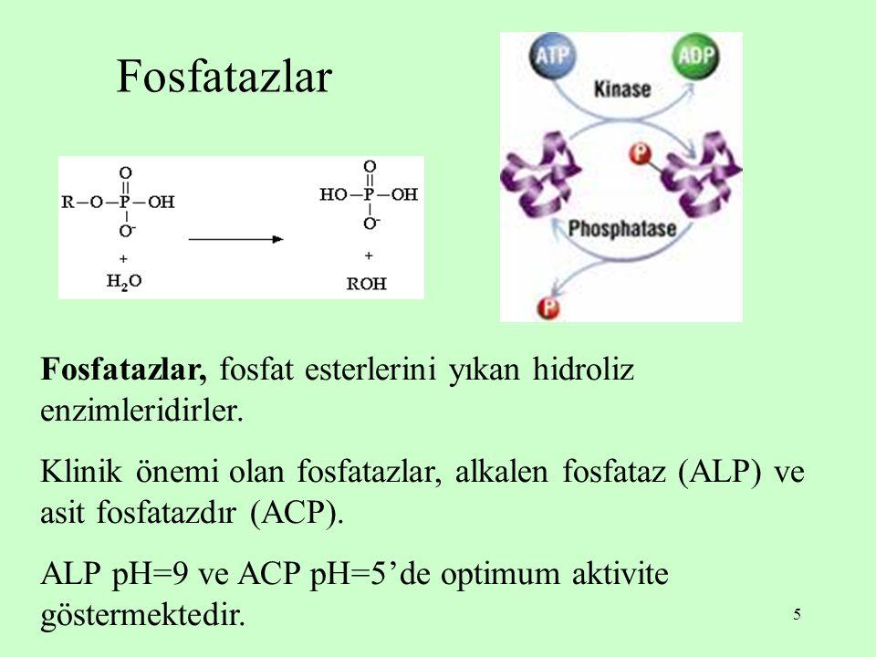 5 Fosfatazlar Fosfatazlar, fosfat esterlerini yıkan hidroliz enzimleridirler. Klinik önemi olan fosfatazlar, alkalen fosfataz (ALP) ve asit fosfatazdı