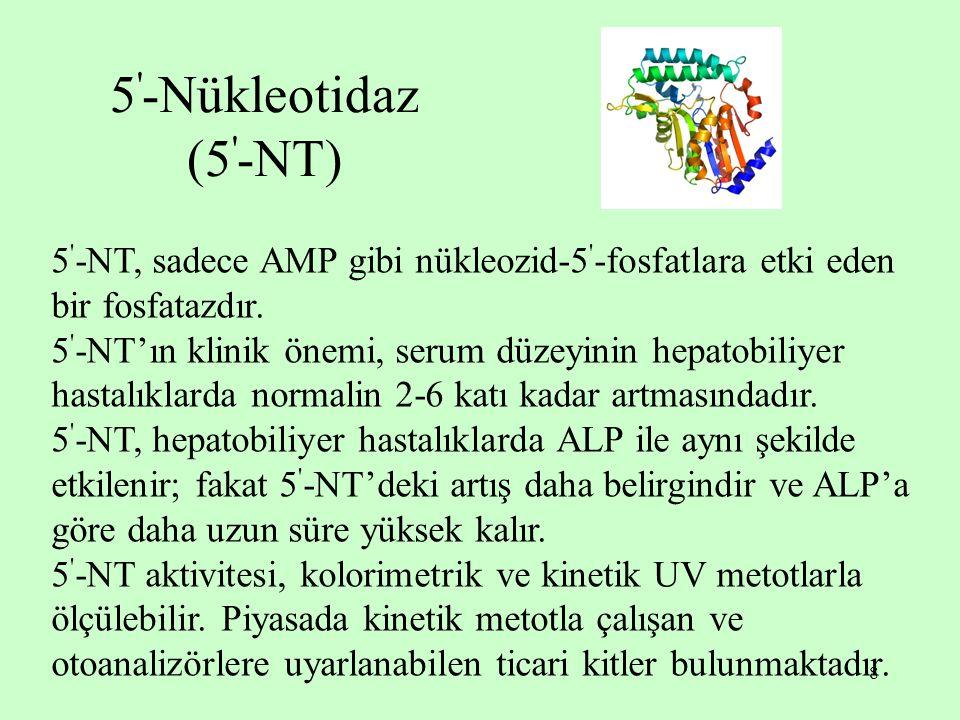 8 5 ' -Nükleotidaz (5 ' -NT) 5 ' -NT, sadece AMP gibi nükleozid-5 ' -fosfatlara etki eden bir fosfatazdır. 5 ' -NT'ın klinik önemi, serum düzeyinin he