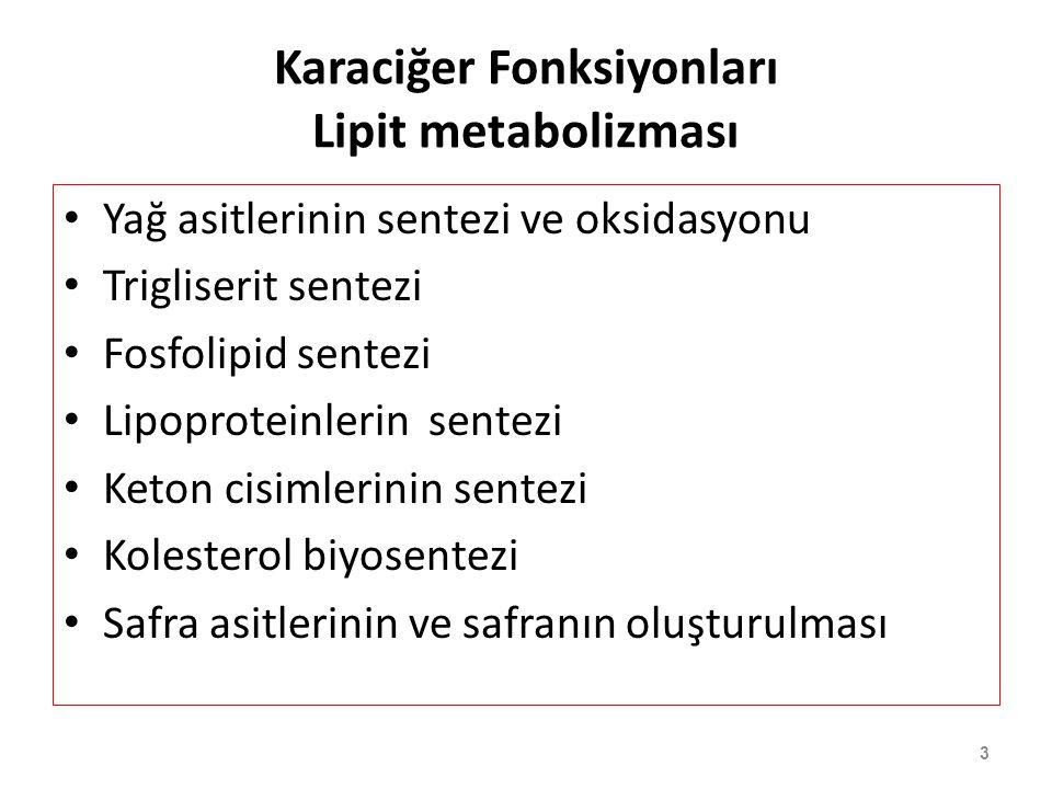3 Karaciğer Fonksiyonları Lipit metabolizması Yağ asitlerinin sentezi ve oksidasyonu Trigliserit sentezi Fosfolipid sentezi Lipoproteinlerin sentezi K