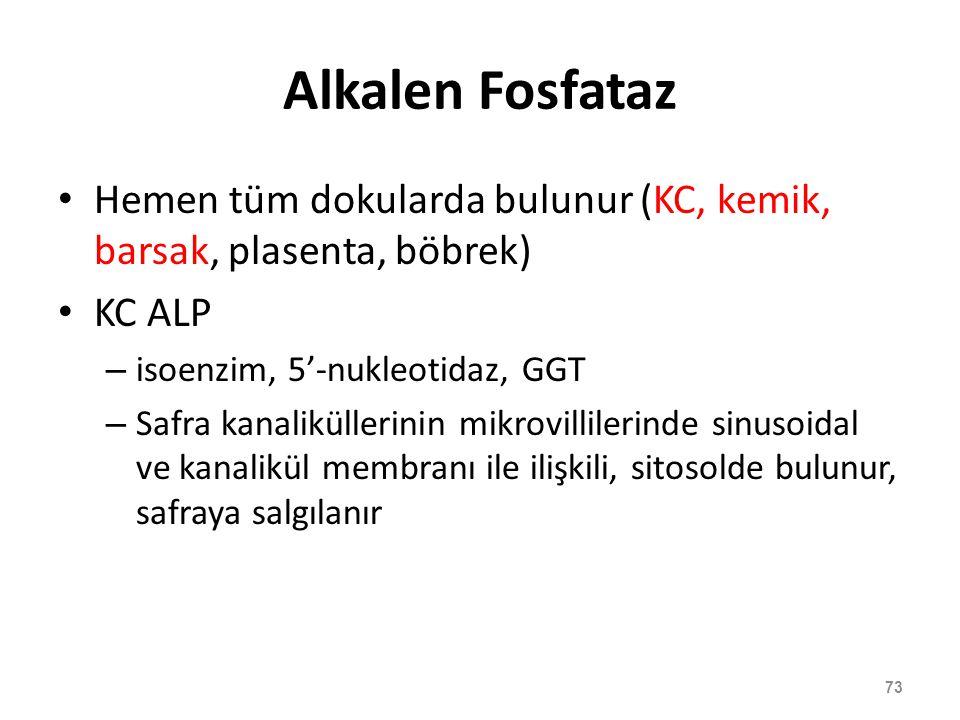 Alkalen Fosfataz Hemen tüm dokularda bulunur (KC, kemik, barsak, plasenta, böbrek) KC ALP – isoenzim, 5'-nukleotidaz, GGT – Safra kanaliküllerinin mik