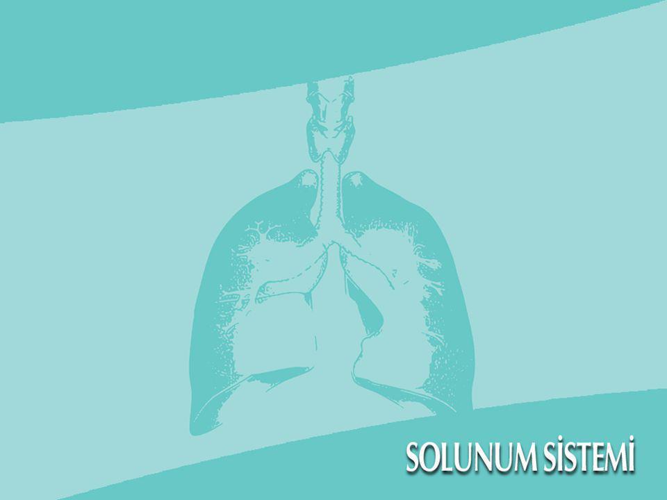 Giriş  Organizmanın canlılığını sürdürebilmesi için gerekli en önemli madde oksijendir.