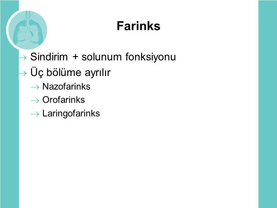 Farinks  Sindirim + solunum fonksiyonu  Üç bölüme ayrılır  Nazofarinks  Orofarinks  Laringofarinks