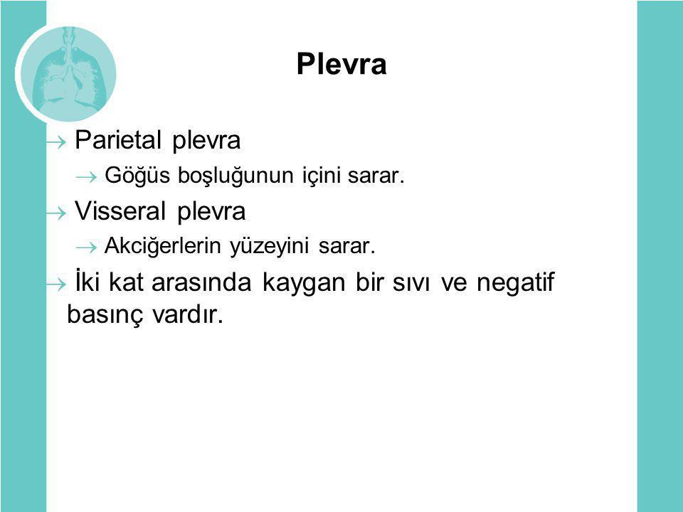 Plevra  Parietal plevra  Göğüs boşluğunun içini sarar.  Visseral plevra  Akciğerlerin yüzeyini sarar.  İki kat arasında kaygan bir sıvı ve negati