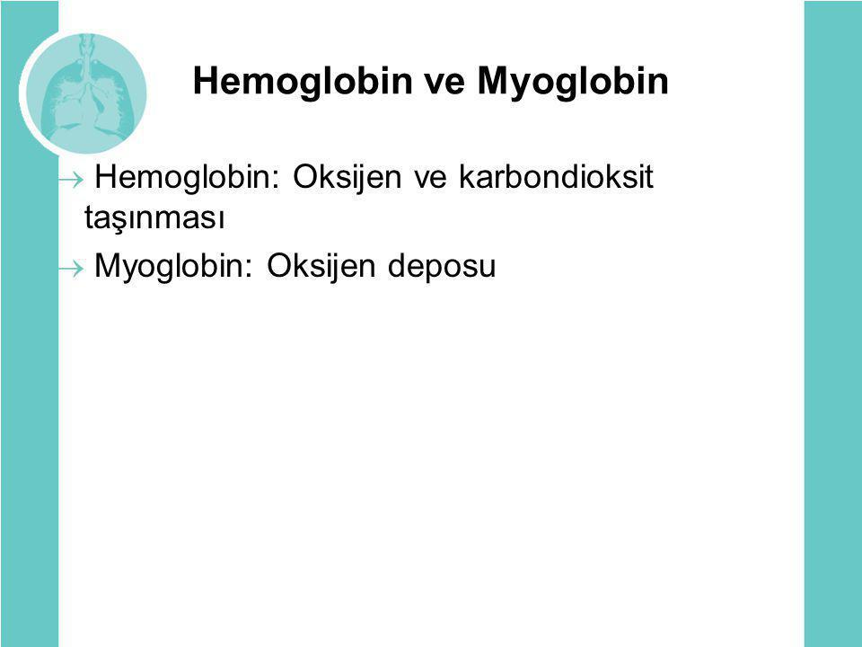 Hemoglobin ve Myoglobin  Hemoglobin: Oksijen ve karbondioksit taşınması  Myoglobin: Oksijen deposu