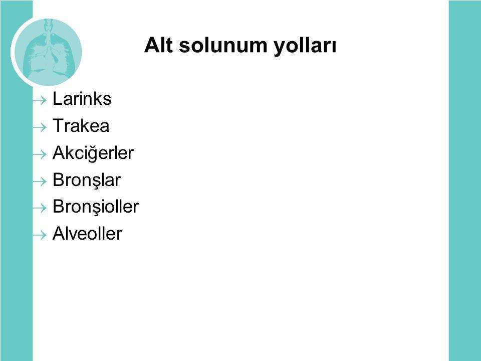 Tanı  Solunum fonksiyon testi  Akciğer grafisi  Alerji testleri