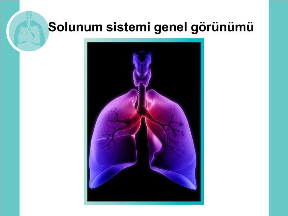 Solunum sistemi genel görünümü