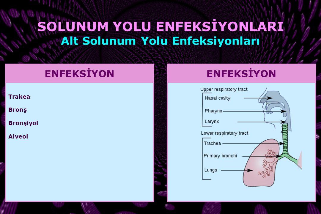TÜRKİYE'DE PNÖMONİDEN ÖLÜM TUİK, Türkiye İstatistik Yıllığı, 2010 ALT SOLUNUM YOLU ENFEKSİYONLARI Pnömoni
