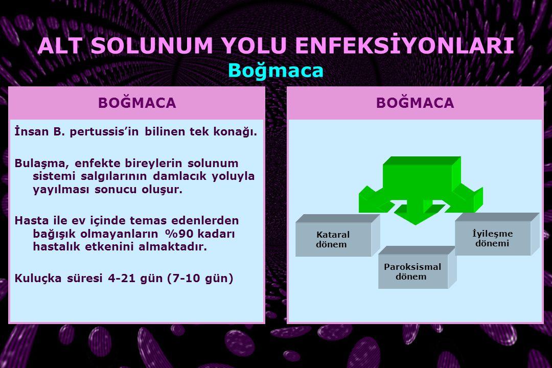 ENFEKSİYON Trakea Bronş Bronşiyol Alveol SOLUNUM YOLU ENFEKSİYONLARI Alt Solunum Yolu Enfeksiyonları
