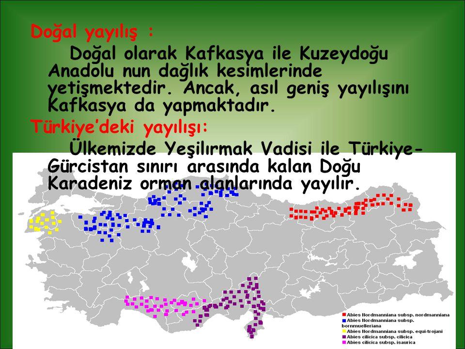Doğal yayılış : Doğal olarak Kafkasya ile Kuzeydoğu Anadolu nun dağlık kesimlerinde yetişmektedir. Ancak, asıl geniş yayılışını Kafkasya da yapmaktadı