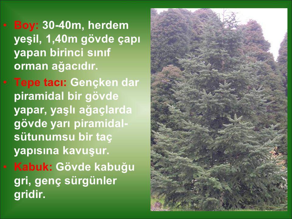 Boy: 30-40m, herdem yeşil, 1,40m gövde çapı yapan birinci sınıf orman ağacıdır. Tepe tacı: Gençken dar piramidal bir gövde yapar, yaşlı ağaçlarda gövd