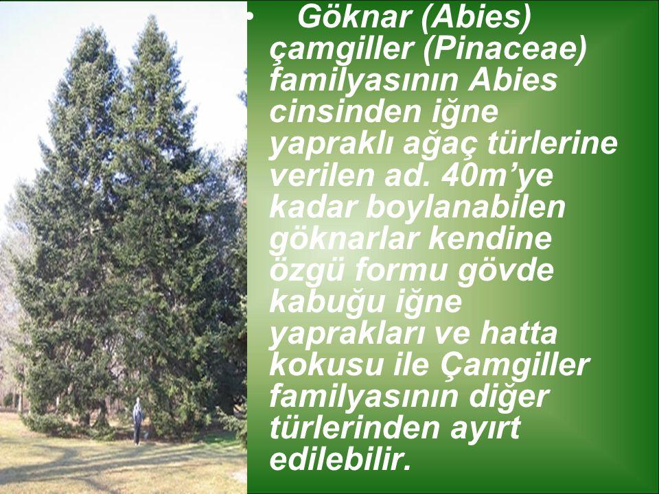 Göknar (Abies) çamgiller (Pinaceae) familyasının Abies cinsinden iğne yapraklı ağaç türlerine verilen ad. 40m'ye kadar boylanabilen göknarlar kendine