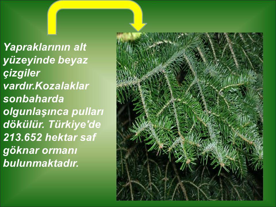 Yapraklarının alt yüzeyinde beyaz çizgiler vardır.Kozalaklar sonbaharda olgunlaşınca pulları dökülür. Türkiye'de 213.652 hektar saf göknar ormanı bulu