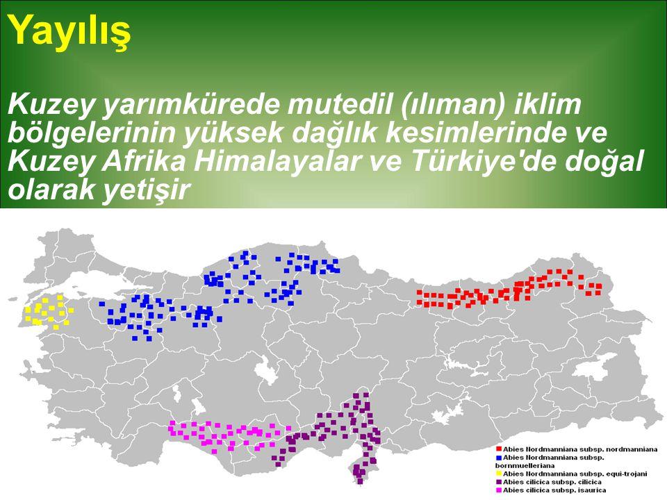 Yayılış Kuzey yarımkürede mutedil (ılıman) iklim bölgelerinin yüksek dağlık kesimlerinde ve Kuzey Afrika Himalayalar ve Türkiye'de doğal olarak yetişi