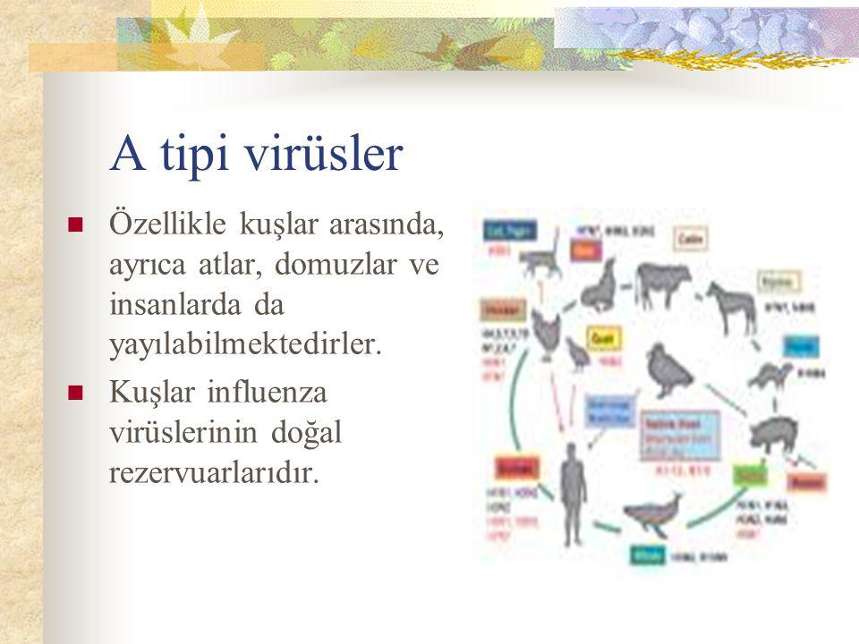 A tipi virüsler Özellikle kuşlar arasında, ayrıca atlar, domuzlar ve insanlarda da yayılabilmektedirler.